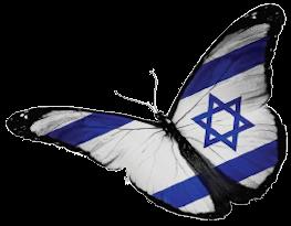 IsraelButterfly-200